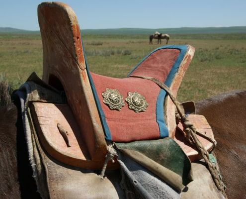 Back of Mongolian Horse