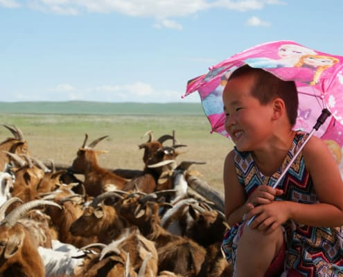 Child and Cashmere Goats