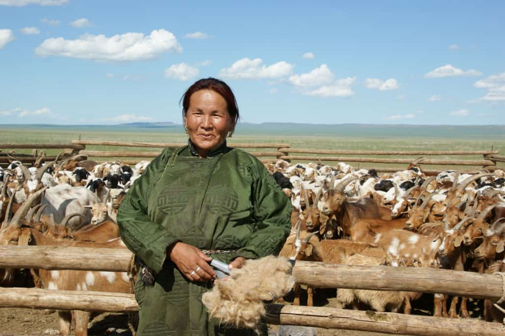 Cashmere Authentico Mongolian Cashmere Grower