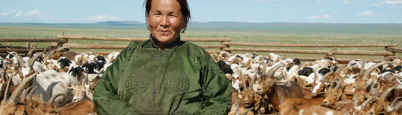 Cashmere Authentico Mongolian Cashmere Grower